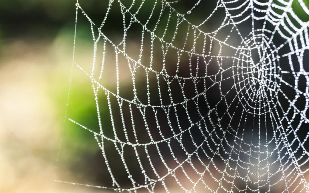 Fare rete fuori e dentro il web